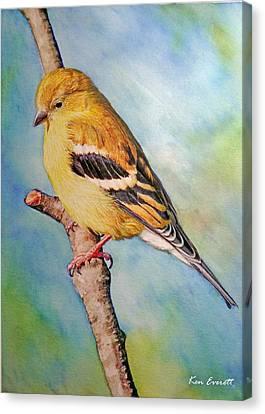 Goldfinch Female Canvas Print by Ken Everett