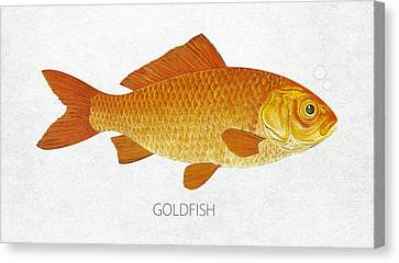 Goldfish Canvas Print by Aged Pixel