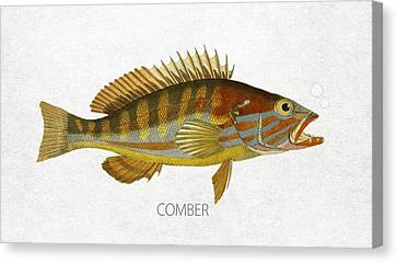 Comber Canvas Print by Aged Pixel