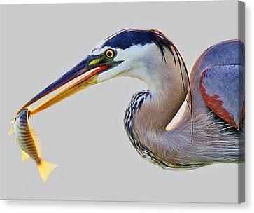 Gone Fishing Canvas Print by Paulette Thomas
