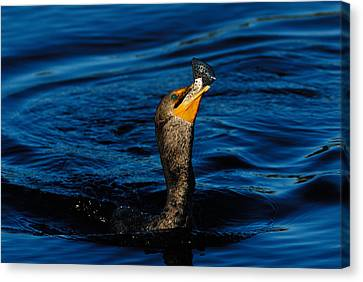 Gone Fishing Canvas Print by Stefan Carpenter