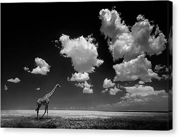 Gone With The Clouds Canvas Print by Alberto Ghizzi Panizza