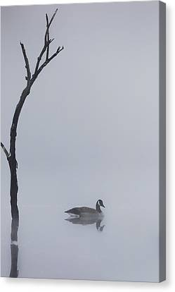Goose Of The Fog Canvas Print by Bill Wakeley