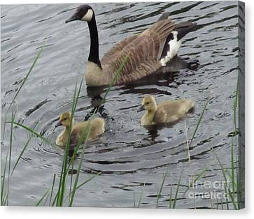 Goose Plus Two Canvas Print by Denise White