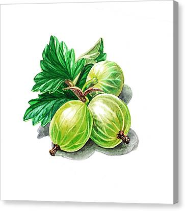 Gooseberry Painting Canvas Print by Irina Sztukowski