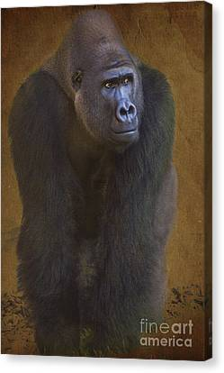 Gorilla The Muscleman Canvas Print by Heiko Koehrer-Wagner
