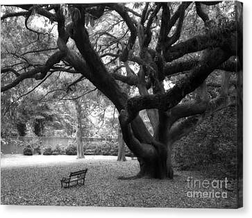 Gothic Surreal Black And White South Carolina Angel Oak Trees Park Landscape Canvas Print by Kathy Fornal