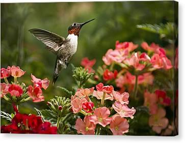 Graceful Garden Jewel Canvas Print by Christina Rollo