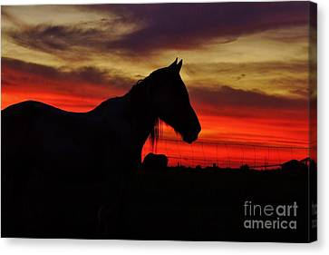 Gracie At Sunset Canvas Print by Lynda Dawson-Youngclaus