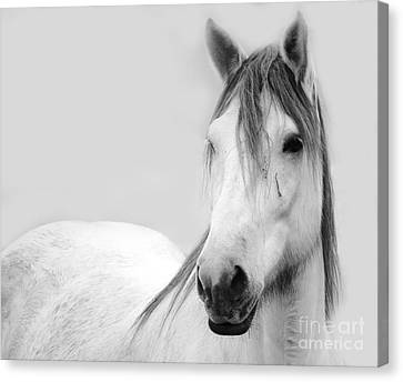 Gracie Grey Canvas Print by Lynda Dawson-Youngclaus