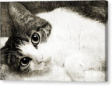 Grammy Said I Could Bw Canvas Print by Andee Design