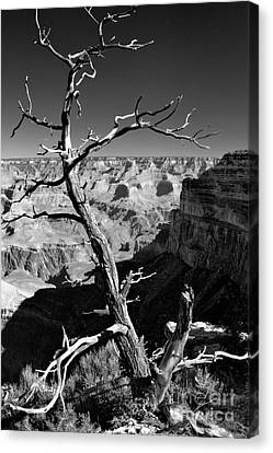 Grand Canyon Bw Canvas Print by Patrick Witz