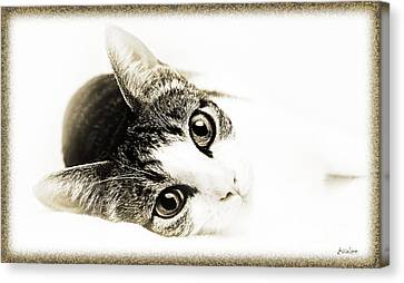 Grand Kitty Cuteness 3 High Key Canvas Print by Andee Design