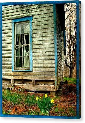 Grandma's Daffodyls Canvas Print by Julie Dant
