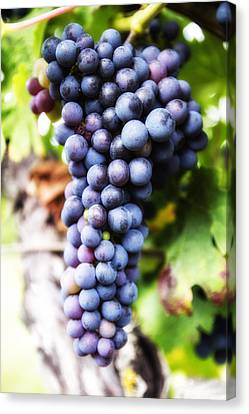 Grape Cluster Canvas Print by Georgia Fowler