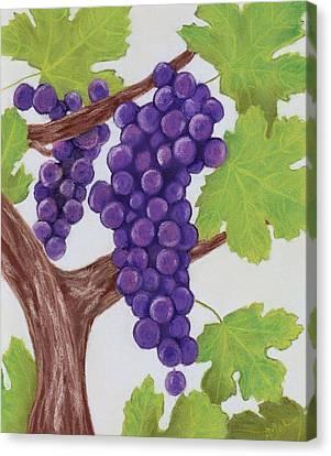 Grape Vine Canvas Print by Anastasiya Malakhova