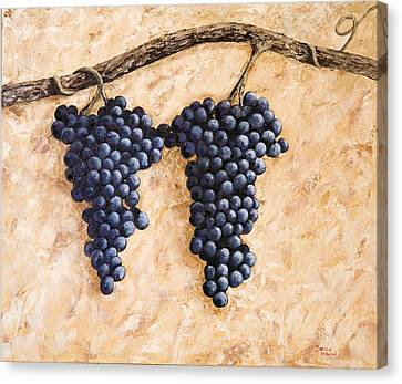Grape Vine Canvas Print by Darice Machel McGuire