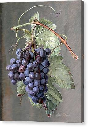 Grapes Canvas Print by Enzie Shahmiri