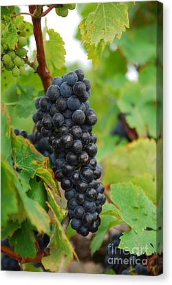 Grapes Canvas Print by Hannes Cmarits