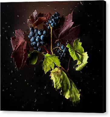 Grapes Canvas Print by Ivan Vukelic