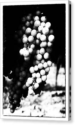 Grapes On The Vine In Mono Canvas Print by Georgia Fowler