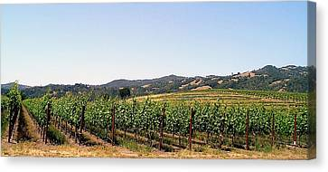 Grapevines. Canvas Print by Oscar Williams