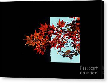 Graphic Leaves Canvas Print by Delphimages Photo Creations