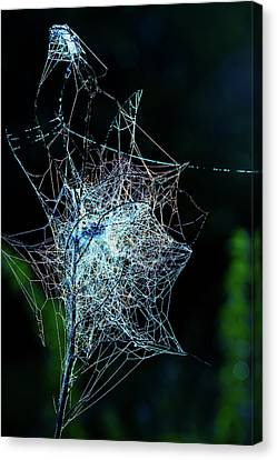 Grass Covered With Spider's Web Canvas Print by Wladimir Bulgar