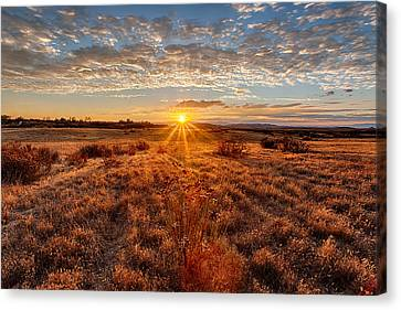 Grassland Sunset Canvas Print by Peter Tellone
