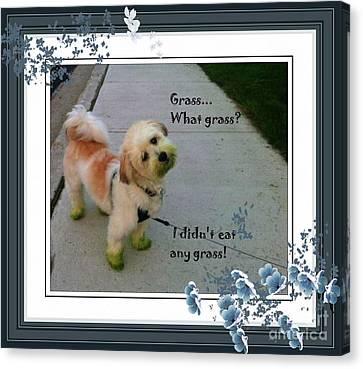Grassy Puppy Canvas Print by Barbara Griffin