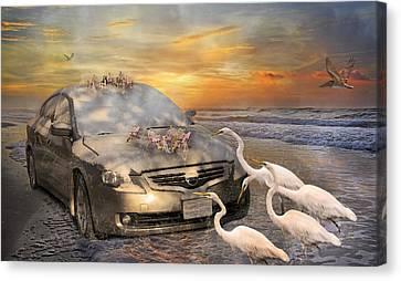 Grateful Friends Curious Egrets Canvas Print by Betsy C Knapp