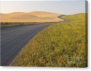 Gravel Road Through Farming Region, Wa Canvas Print by John Shaw
