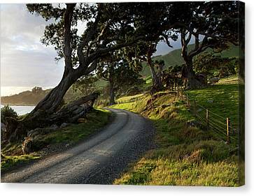Gravel Seaside Road At Sunset Canvas Print by Jean Desy