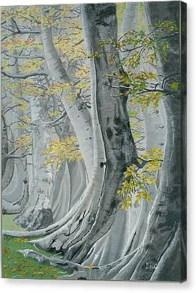 Gray Forest Canvas Print by David Wolfer