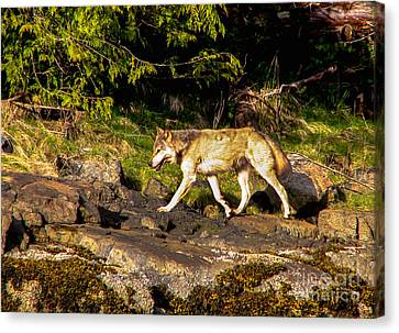 Gray Wolf Canvas Print by Robert Bales