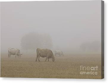 Grazing Canvas Print by Dan Jurak