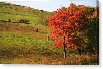 Grazing Horses In Autumn Canvas Print by Dan Sproul