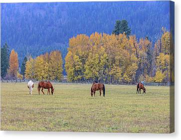 Grazing Horses Winthrop Western Canvas Print by Tom Norring