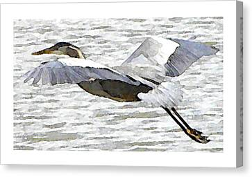 Great Blue Flight Canvas Print by John Goyer
