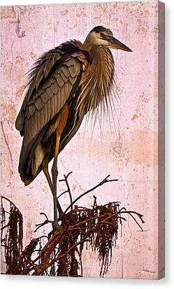 Great Blue Heron Canvas Print by Debra and Dave Vanderlaan