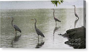 Great Blue Herons Canvas Print by Bob and Jan Shriner