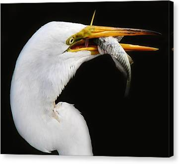 Great Catch Canvas Print by Paulette Thomas