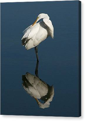 Great Egret Reflection 11x14 Canvas Print by David Lynch