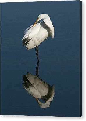 Great Egret Reflection 16x20 Canvas Print by David Lynch