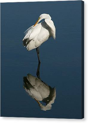 Great Egret Reflection 8x10 Canvas Print by David Lynch