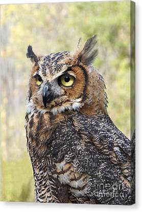 Great Horned Owl Canvas Print by Ann Horn