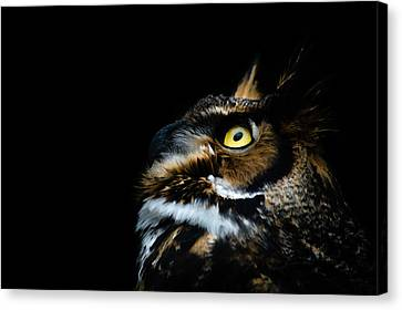 Great Horned Owl Canvas Print by Tracy Munson