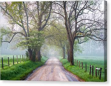 Great Smoky Mountains National Park Cades Cove Country Road Canvas Print by Dave Allen