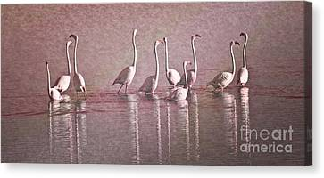 Greater Flamingos Canvas Print by Heiko Koehrer-Wagner