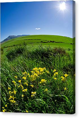 Green Acres Canvas Print by Aaron S Bedell